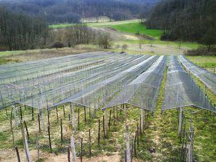new Zaštita vinograda od TUČE equipment for vineyards